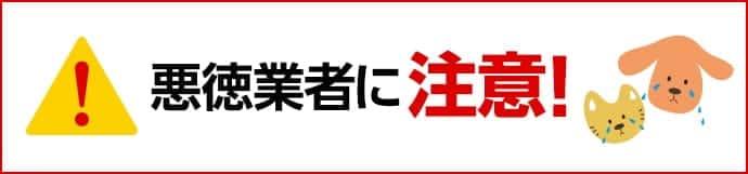 """""""amazonギフト券買取悪徳業者一覧""""/"""